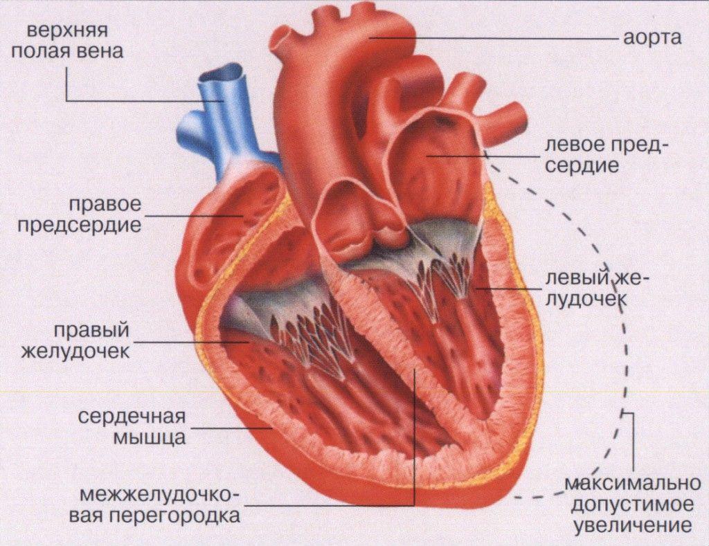 miokardit-serdca_3